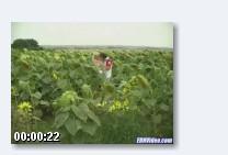 блондинку трахают!!! (2008) SATRip